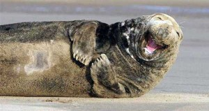 Animals With the Most Adorable Smiles (43 photos) 2