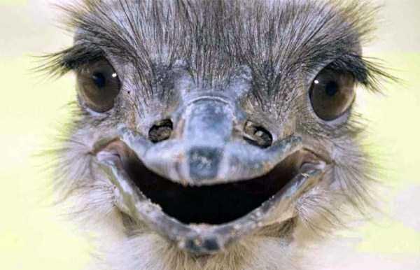 smiling-animals (20)