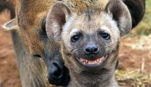 Animals With the Most Adorable Smiles (43 photos) 21