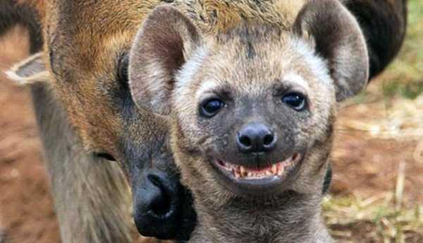 smiling-animals (21)