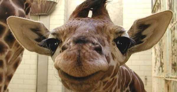 smiling-animals (22)