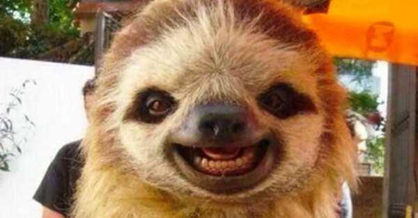 smiling-animals (25)