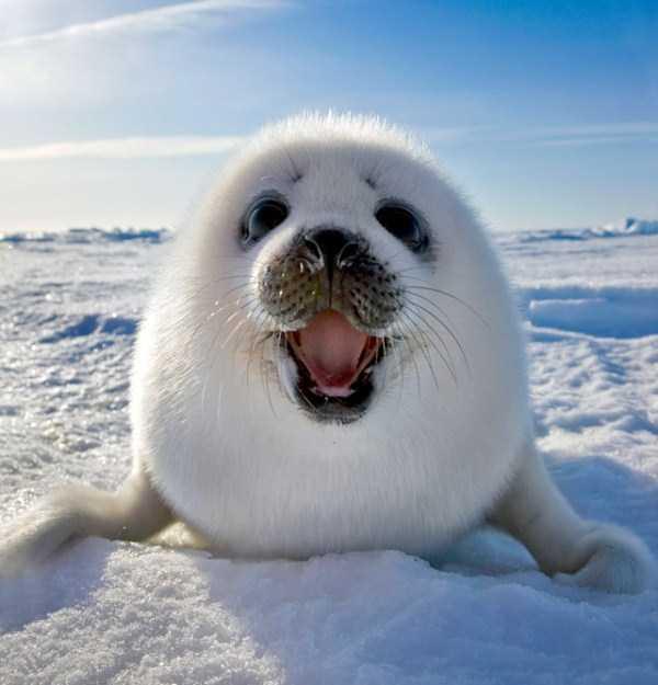 smiling-animals (29)
