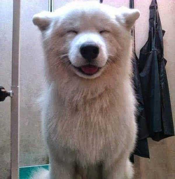 smiling-animals (30)