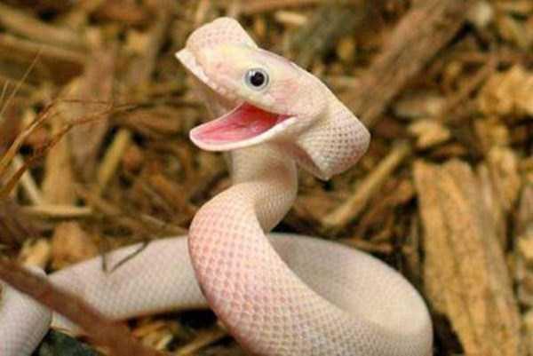 smiling-animals (32)