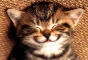 Animals With the Most Adorable Smiles (43 photos) 33