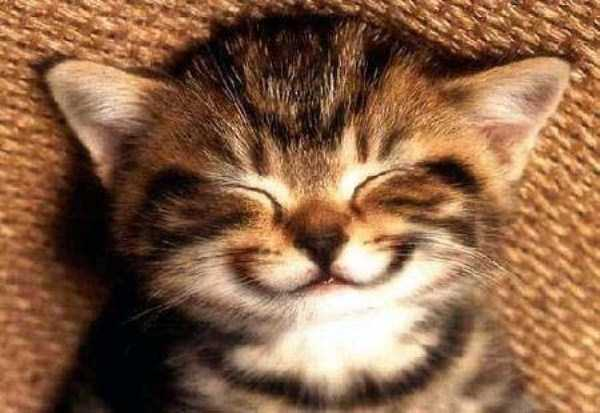smiling-animals (33)