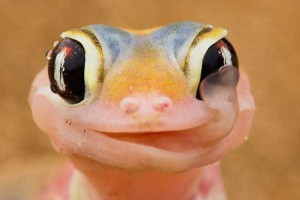 Animals With the Most Adorable Smiles (43 photos) 34