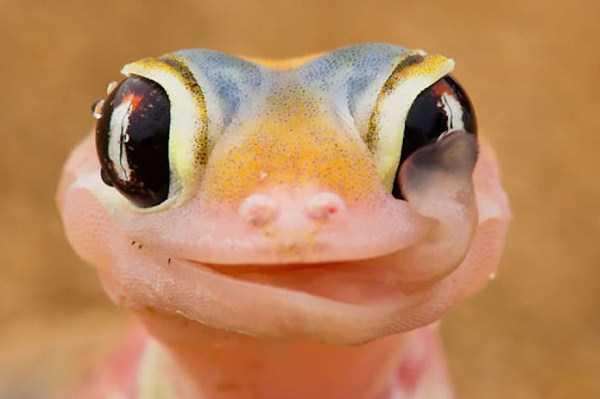 smiling-animals (34)