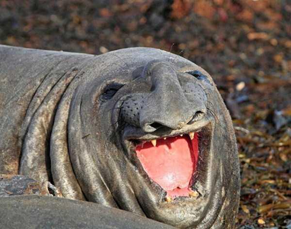 smiling-animals (36)