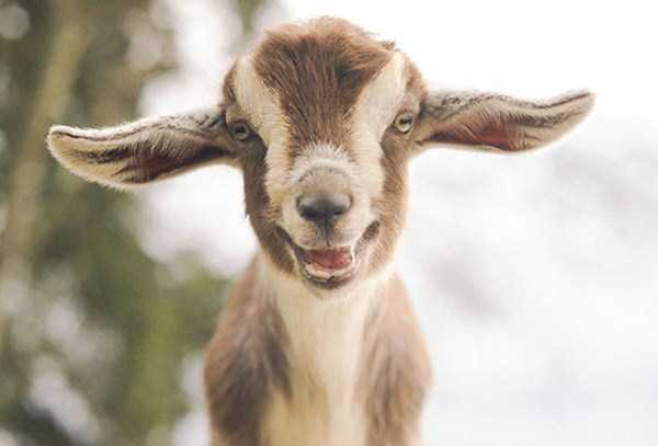 smiling-animals (37)