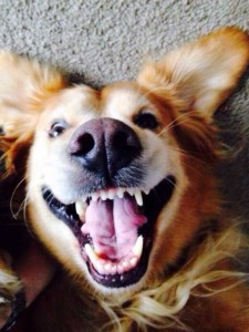 Animals With the Most Adorable Smiles (43 photos) 38