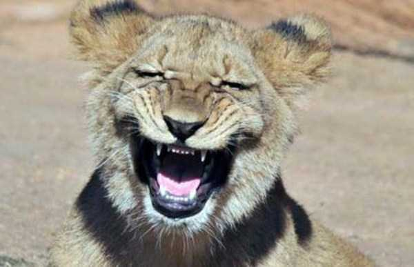 smiling-animals (43)