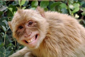 Animals With the Most Adorable Smiles (43 photos) 7
