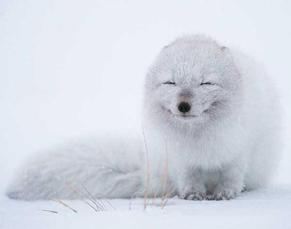 smiling-animals (9)