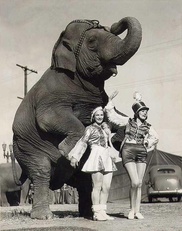 vintage-circus-photos (27)