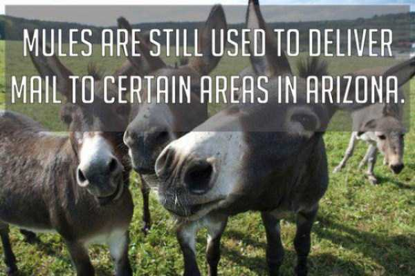 Crazy But True Facts About America (22 photos) 22