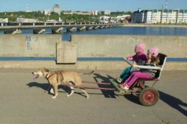 wtf-photos-from-russia (48)