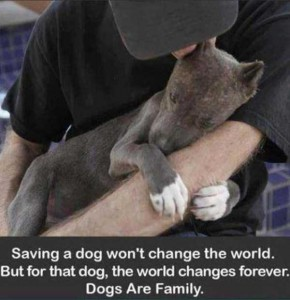 There Are Some Good People Among Us (30 photos) 1