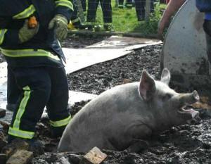 Unlucky Animals Stuck In Odd Places (60 photos) 12