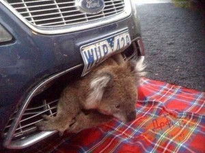 Unlucky Animals Stuck In Odd Places (60 photos) 19