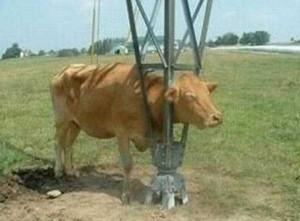 Unlucky Animals Stuck In Odd Places (60 photos) 21