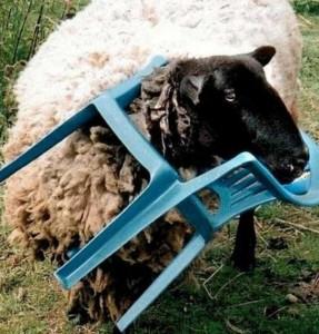 Unlucky Animals Stuck In Odd Places (60 photos) 26