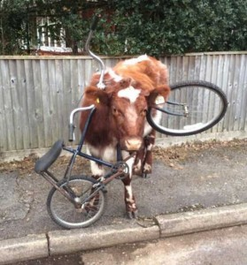 Unlucky Animals Stuck In Odd Places (60 photos) 29