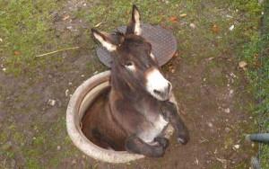 Unlucky Animals Stuck In Odd Places (60 photos) 33