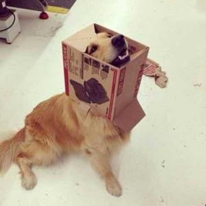 Unlucky Animals Stuck In Odd Places (60 photos) 39