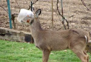 Unlucky Animals Stuck In Odd Places (60 photos) 4