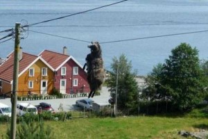 Unlucky Animals Stuck In Odd Places (60 photos) 40