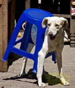 Unlucky Animals Stuck In Odd Places (60 photos) 41