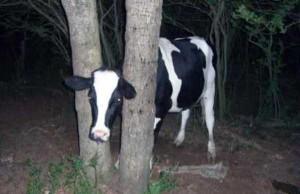 Unlucky Animals Stuck In Odd Places (60 photos) 42