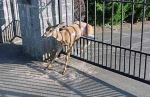 Unlucky Animals Stuck In Odd Places (60 photos) 44