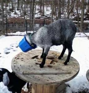 Unlucky Animals Stuck In Odd Places (60 photos) 45