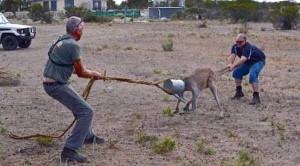 Unlucky Animals Stuck In Odd Places (60 photos) 47