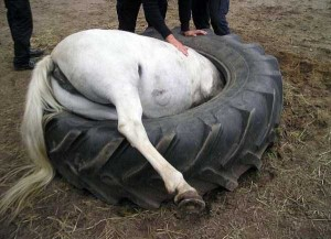 Unlucky Animals Stuck In Odd Places (60 photos) 50