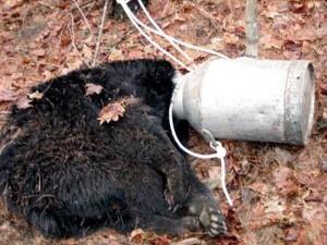 Unlucky Animals Stuck In Odd Places (60 photos) 6