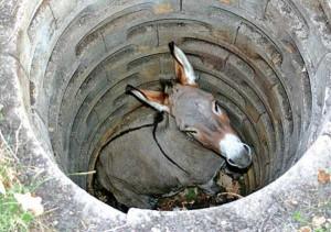 Unlucky Animals Stuck In Odd Places (60 photos) 60