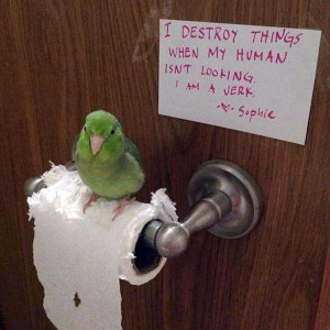 Birds Being Jerks (31 photos) 2