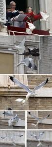 Birds Being Jerks (31 photos) 20