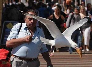 Birds Being Jerks (31 photos) 22