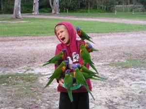 Birds Being Jerks (31 photos) 26