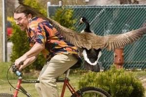 Birds Being Jerks (31 photos) 29