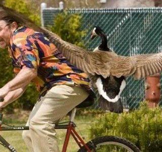 Birds Being Jerks (31 photos)