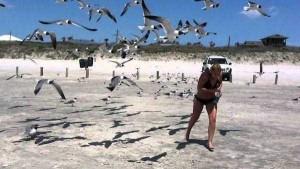 Birds Being Jerks (31 photos) 3