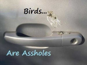 Birds Being Jerks (31 photos) 6