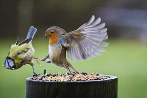 Birds Being Jerks (31 photos) 7