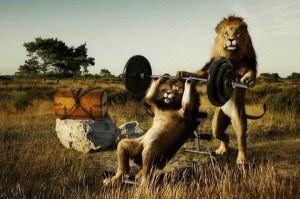 Oddly Funny Photoshopped Photos (39 photos) 11